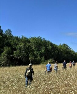 Six people walk through a brown field of Queen Anne's Lace from left to right, some of them holding hand tools. In the background there is a thick stand of trees. It is a sunny day with a blue sky.