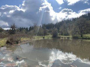 Courtney Creek Spring Visit