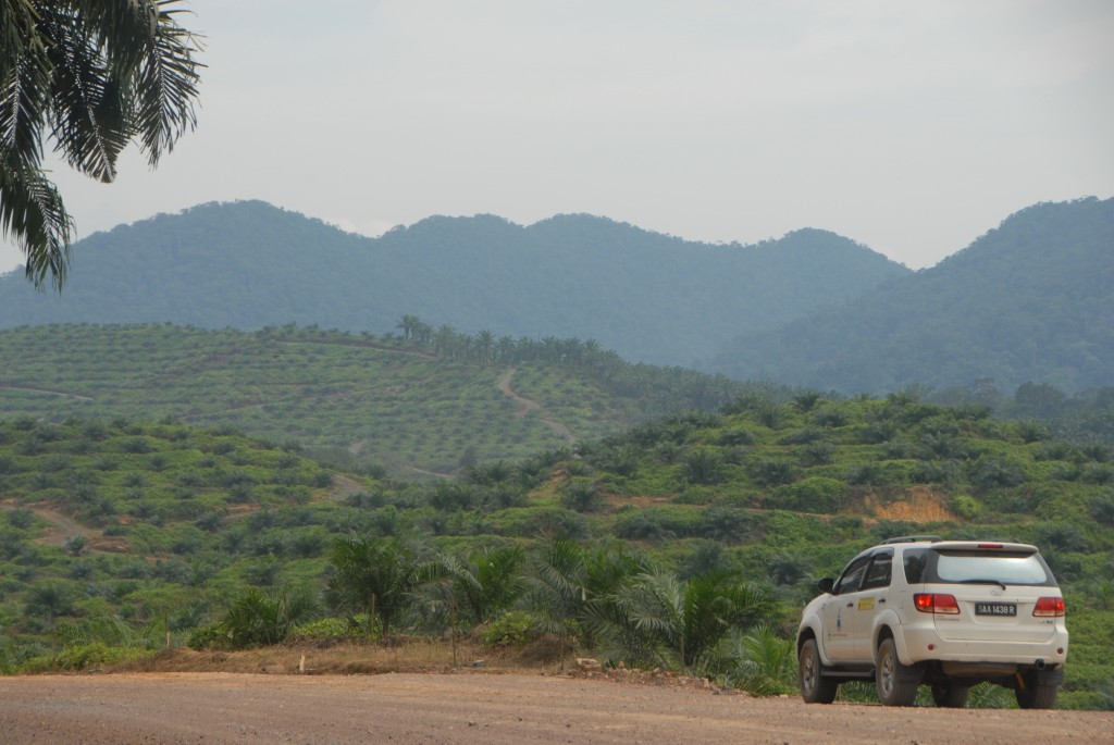 Photo 2: Oil Palm landscape. Palm oil comes from plantations in the tropics. In the past few decades, an area the size of Cambodia (18 million hectares) has been planted to oil palm worldwide. Sixty percent of this area has been directly converted from primary forest, much of it on Borneo.